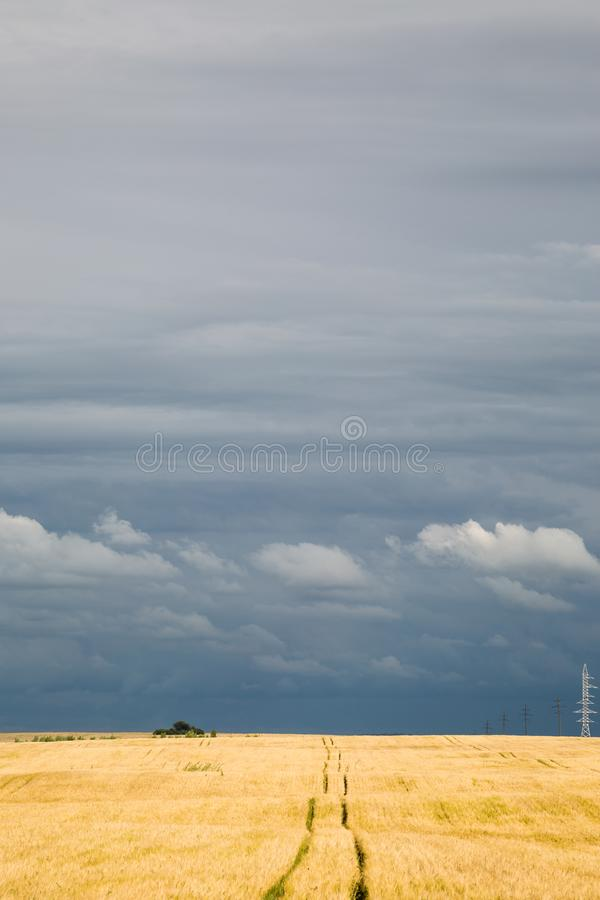 Θυελλώδης ουρανός πέρα από έναν τομέα του σίτου στοκ φωτογραφίες
