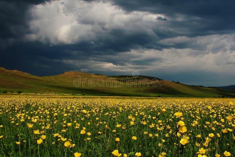 Θυελλώδης ουρανός πέρα από τον κίτρινο τομέα λουλουδιών την άνοιξη στοκ εικόνες