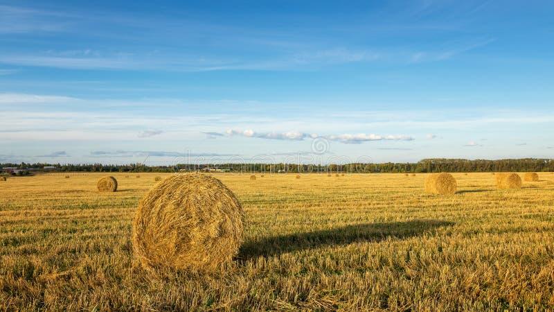 Θυμωνιά χόρτου στον τομέα, Ρωσία, Αύγουστος, στοκ φωτογραφίες