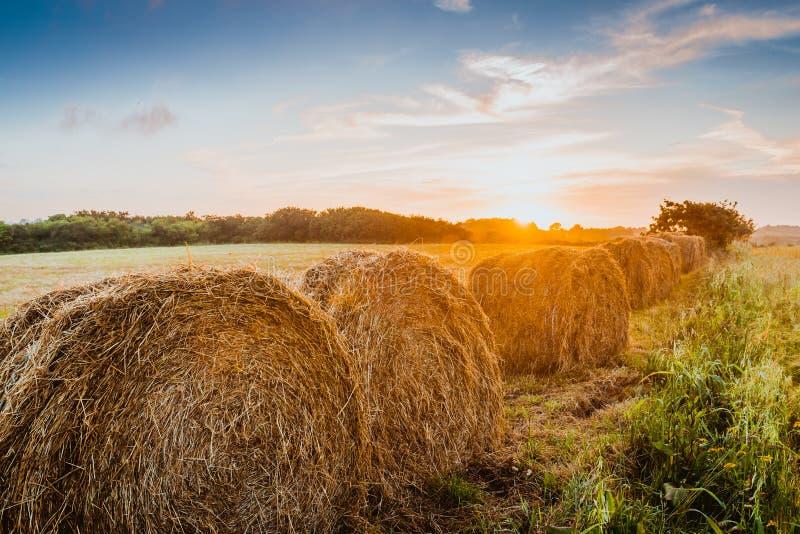 Θυμωνιές χόρτου έννοιας συγκομιδών στον τομέα ηλιοβασιλέματος στοκ φωτογραφία