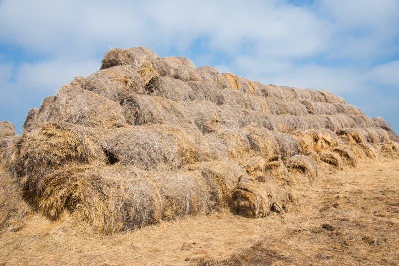 Θυμωνιές χόρτου αχύρου που συσσωρεύονται από κοινού στοκ φωτογραφίες με δικαίωμα ελεύθερης χρήσης