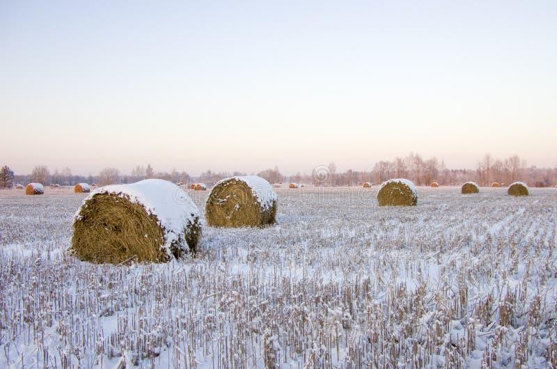 Θυμωνιές χόρτου στο παγωμένο πεδίο στοκ εικόνες