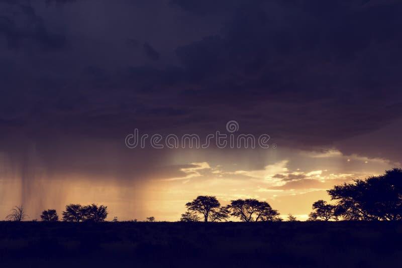 Θύελλα βροχής της Καλαχάρης που πλησιάζει προς το τέλος του απογεύματος με το silho στοκ εικόνα με δικαίωμα ελεύθερης χρήσης