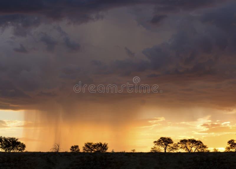 Θύελλα βροχής της Καλαχάρης που πλησιάζει προς το τέλος του απογεύματος με το silho στοκ φωτογραφία με δικαίωμα ελεύθερης χρήσης