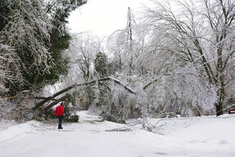 Θύελλα πάγου - 22 Δεκεμβρίου 2013 νότιο Οντάριο στοκ φωτογραφία με δικαίωμα ελεύθερης χρήσης