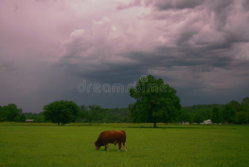 Θύελλα του Bull στοκ φωτογραφία
