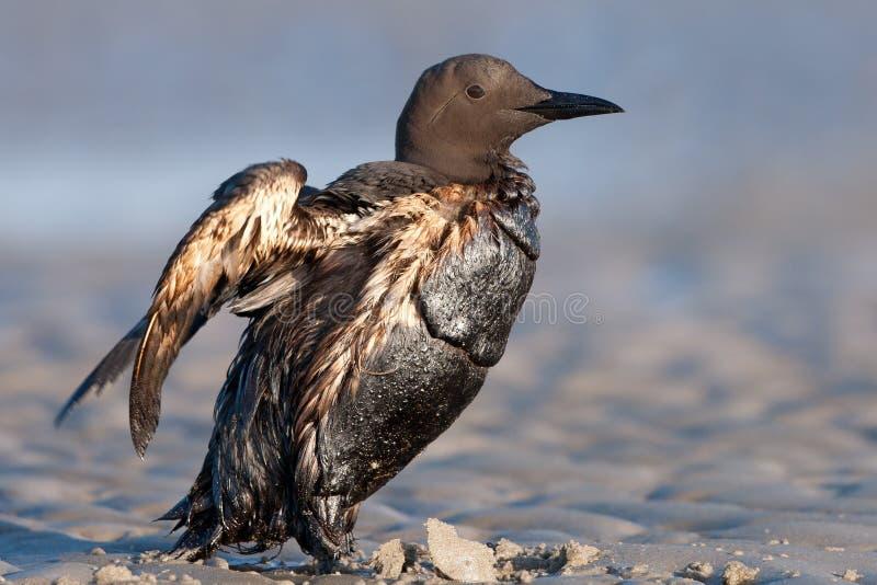 θύμα πετρελαίου στοκ εικόνες