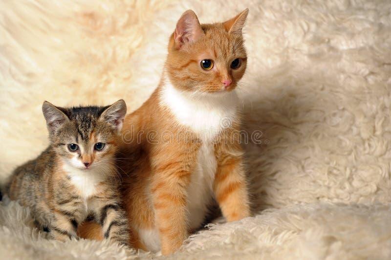 Download διάνυσμα γατακιών απεικόνισης γατών Στοκ Εικόνες - εικόνα από παλτό, χρώμα: 22797240