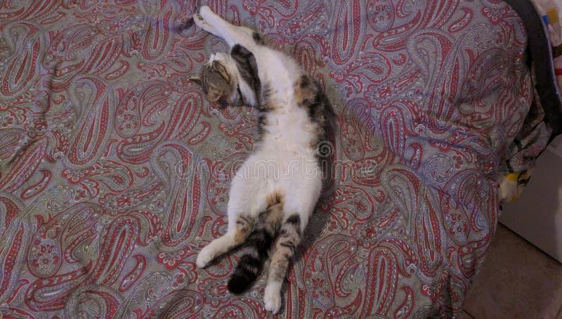 διάστημα αντιγράφων γατών σπορείων στοκ εικόνες