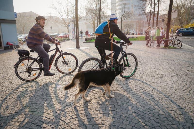Ιένα, Γερμανία 23 Μαρτίου 2019 Πρεσβύτεροι που οδηγούν τα ποδήλατα με ένα μεγάλο σκυλί στοκ φωτογραφία