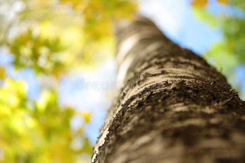 διαθέσιμο διάνυσμα δέντρων απεικόνισης φθινοπώρου στοκ φωτογραφία