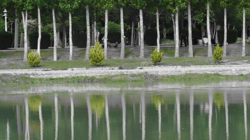 διακοπές Σαββατοκύριακου στο Ιράν, δέντρα που απεικονίζονται στο νερό στοκ εικόνα