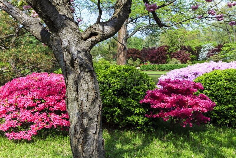 ιαπωνική σκηνή κήπων στοκ φωτογραφία με δικαίωμα ελεύθερης χρήσης