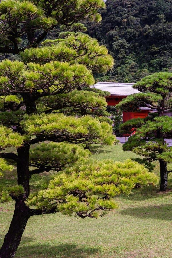 Ιαπωνικός κήπος με το δέντρο πεύκων στοκ φωτογραφία με δικαίωμα ελεύθερης χρήσης