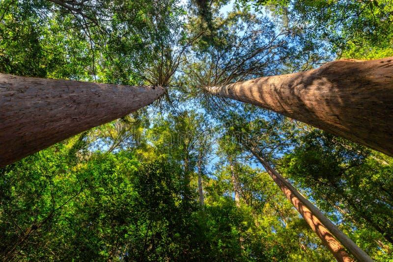 Ιαπωνικό άγριο δάσος βουνών στοκ εικόνα με δικαίωμα ελεύθερης χρήσης