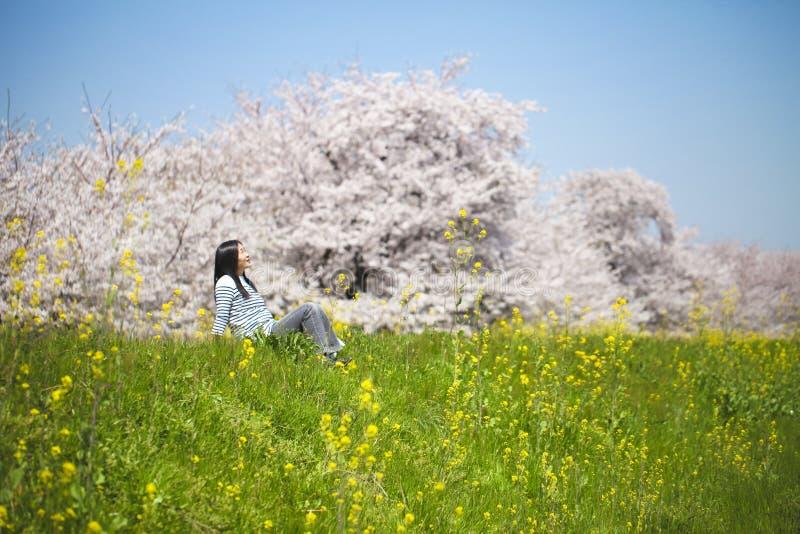 Ιαπωνικό άνθος κερασιών στοκ φωτογραφία