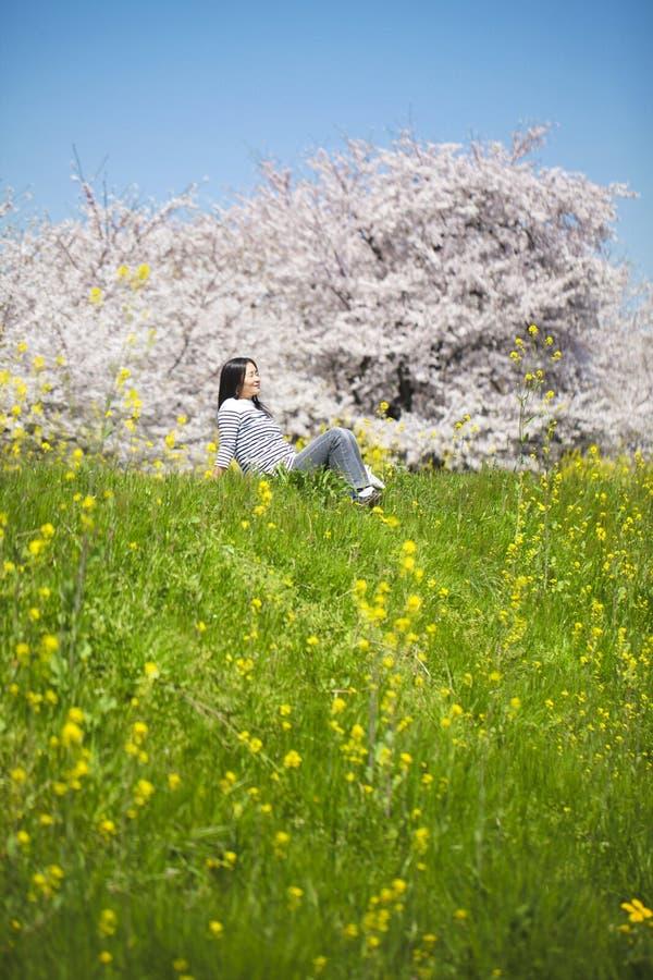 Ιαπωνικό άνθος κερασιών στοκ εικόνες με δικαίωμα ελεύθερης χρήσης