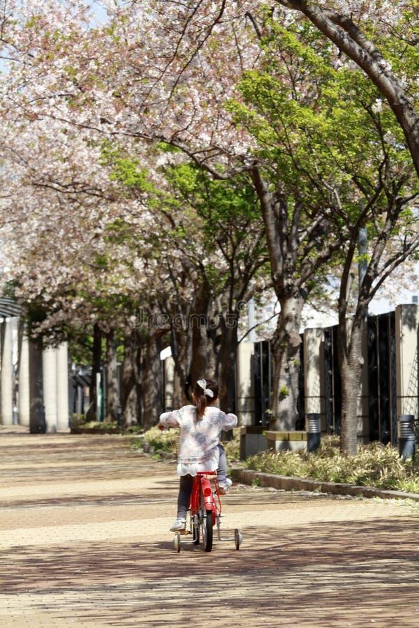 Ιαπωνικό κορίτσι που οδηγά στο ποδήλατο κάτω από τα άνθη κερασιών στοκ φωτογραφία με δικαίωμα ελεύθερης χρήσης