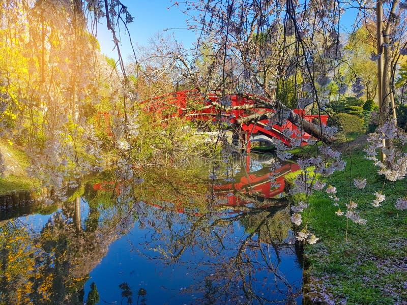 Ιαπωνικό τοπίο ύφους Οι κλάδοι του ανθίζοντας κερασιού επάνω από την επιφάνεια της λίμνης στοκ φωτογραφία