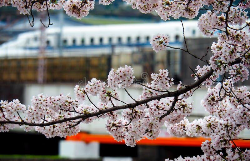 Ιαπωνικό τραίνο σφαιρών με τα άνθη κερασιών στοκ φωτογραφία με δικαίωμα ελεύθερης χρήσης