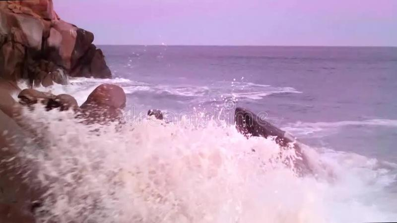 διαστημικό διάνυσμα κειμένων φυκιών θάλασσας ζωής απεικόνισης ψαριών αντιγράφων φυσαλίδων απόθεμα βίντεο