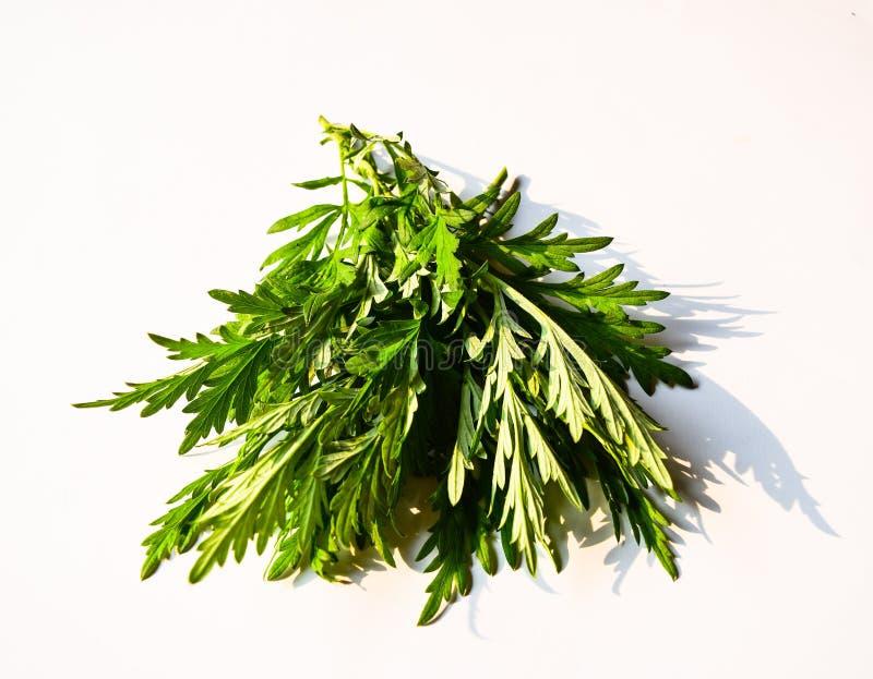 Ιατρικά ιερά φύλλα βασιλικού ή tulsi που απομονώνονται στο άσπρο υπόβαθρο στοκ εικόνες