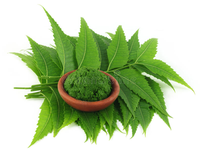 Ιατρικά φύλλα neem με την κόλλα στοκ εικόνα με δικαίωμα ελεύθερης χρήσης