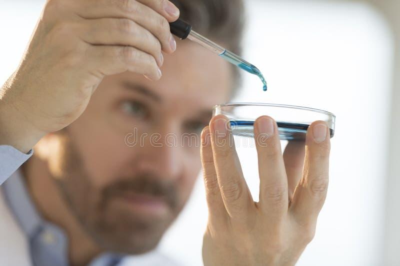 Ιατρική επαγγελματική δοκιμή πραγματοποίησης στο εργαστήριο στοκ φωτογραφία