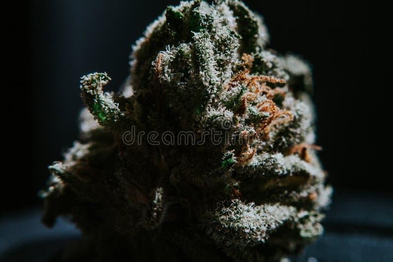 Ιατρική μαριχουάνα, καννάβεις, Sativa, Indica, Trichomes, THC, CBD, θεραπεία καρκίνου, ζιζάνιο, λουλούδι, κάνναβη, γραμμάριο, οφθ στοκ εικόνα με δικαίωμα ελεύθερης χρήσης