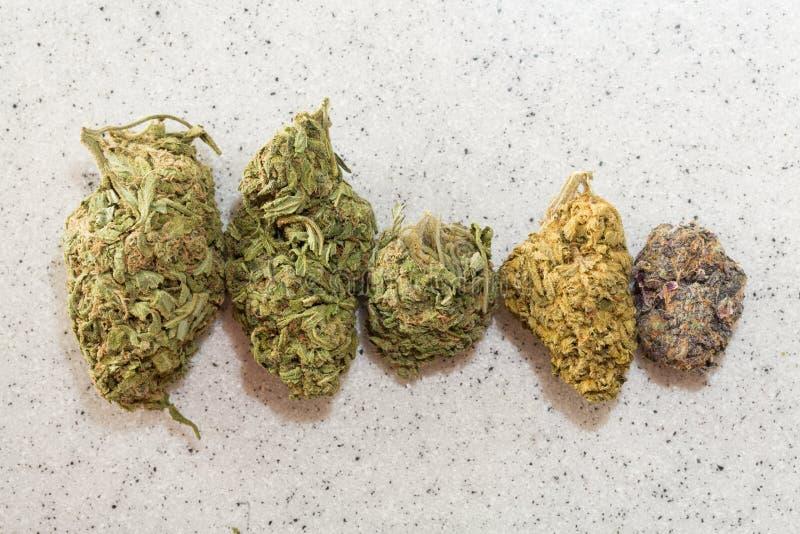 Ιατρική μαριχουάνα στοκ εικόνα με δικαίωμα ελεύθερης χρήσης