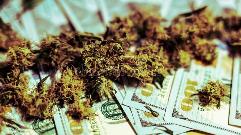 Ιατρικοί οφθαλμοί μαριχουάνα που βρίσκονται στα χρήματα, κινηματογράφηση σε πρώτο πλάνο Αυξανόμενος τις καννάβεις εσωτερικές οργα στοκ φωτογραφία