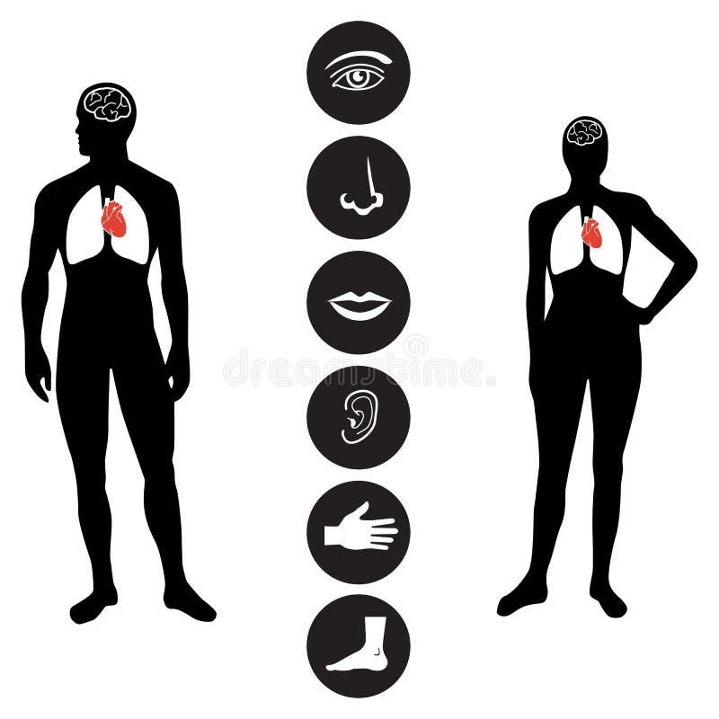 Ιατρικό εικονίδιο μερών ανθρώπινου σώματος στοκ εικόνα