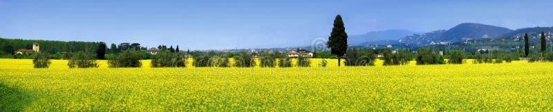 λιβάδι λουλουδιών κίτρινο Θερινή σκηνή κοντά στη Φλωρεντία στοκ εικόνα με δικαίωμα ελεύθερης χρήσης