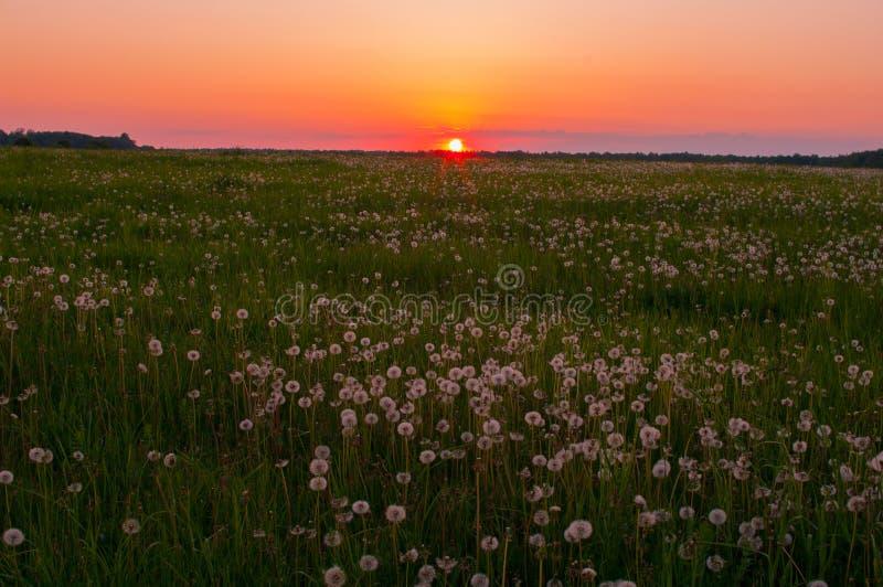 λιβάδι πέρα από το ηλιοβασί στοκ φωτογραφίες