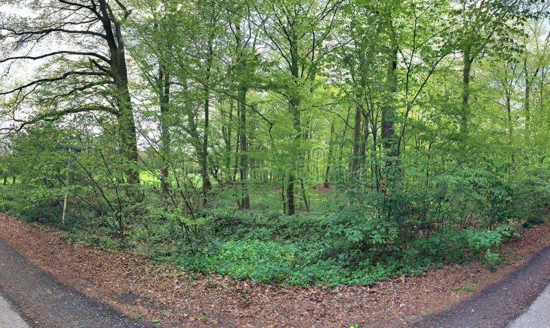 Ιδιαίτερα λεπτομερές φυσικό δασικό τοπίο σε ένα πανόραμα υψηλής ανάλυσης που βλέπει στη βόρεια Ευρώπη στοκ φωτογραφία με δικαίωμα ελεύθερης χρήσης