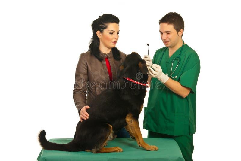 ιδιοκτήτης σκυλιών οδοντιάτρων εξέτασης στοκ εικόνες με δικαίωμα ελεύθερης χρήσης