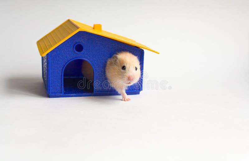 ιδιοκτήτης σπιτιού μικρός στοκ εικόνα