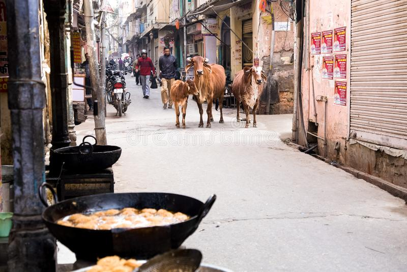 Ιερές αγελάδες στην οδό, Ινδία στοκ φωτογραφία με δικαίωμα ελεύθερης χρήσης