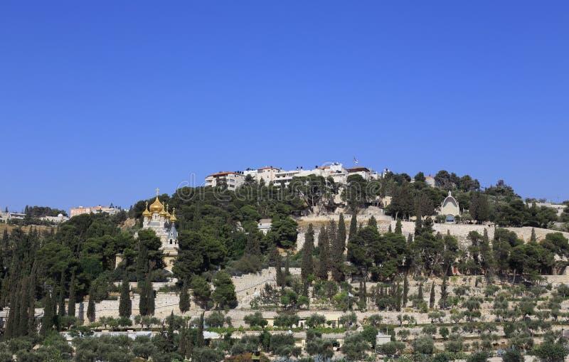 Ιερουσαλήμ - υποστήριγμα των εκκλησιών ελιών στοκ εικόνες