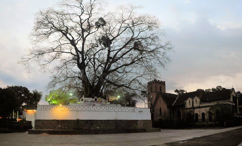 Ιερό βουδιστικό δέντρο bodhi, Σρι Λάνκα στοκ φωτογραφίες με δικαίωμα ελεύθερης χρήσης