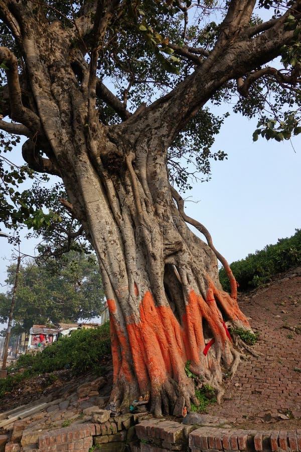 Ιερό χρωματισμένο δέντρο πορτοκάλι στοκ φωτογραφία με δικαίωμα ελεύθερης χρήσης