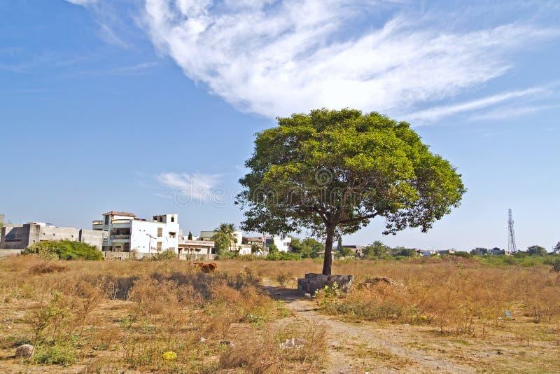 Ιερό Bhalka Tirtha στοκ εικόνες