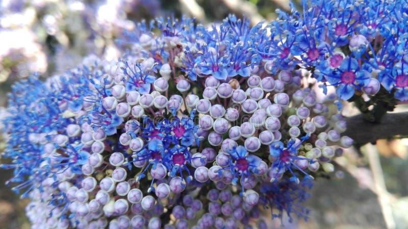 Ινδία Gokarna λουλούδι ανασκόπησης φ&ups στοκ εικόνες