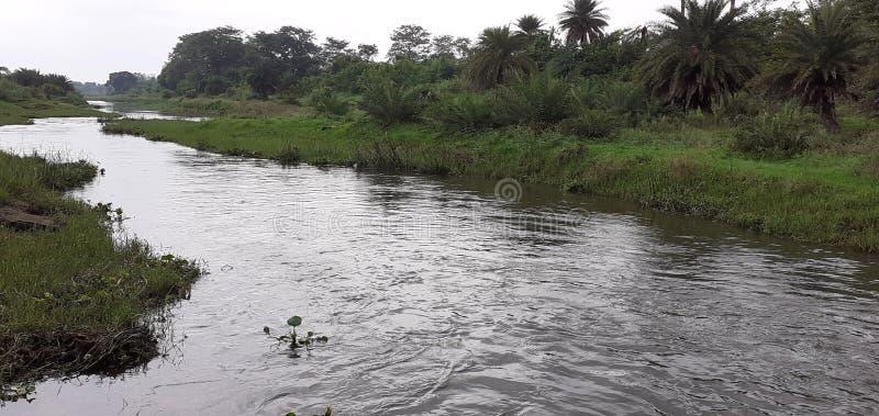 Ινδικοί μικροί ποταμός και δάσος στοκ εικόνες με δικαίωμα ελεύθερης χρήσης