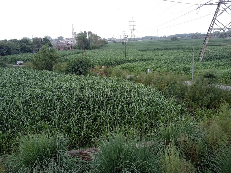 Ινδικό αγρόκτημα όπως αυτό στοκ εικόνες