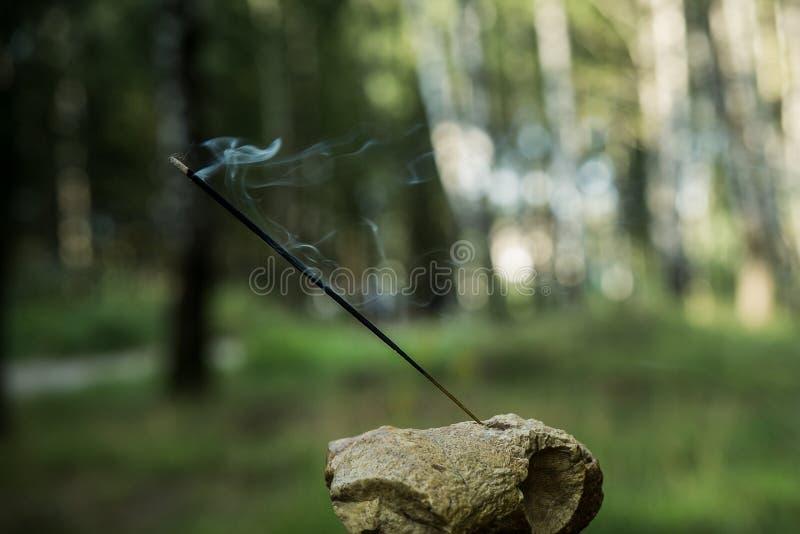 Ινδικό αναμμένο θυμίαμα καπνίζοντας ραβδί ενάντια στο δάσος στοκ εικόνα με δικαίωμα ελεύθερης χρήσης