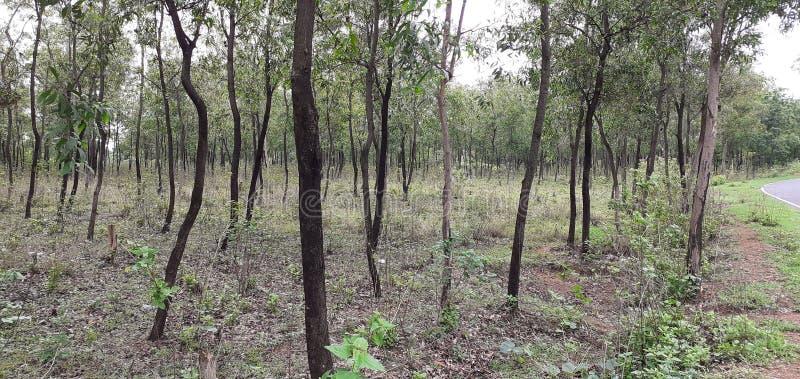 Ινδικό μικρό δάσος στοκ εικόνες με δικαίωμα ελεύθερης χρήσης