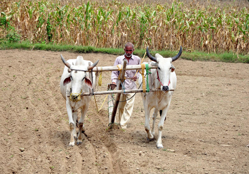 ινδικό χωριό αγροτών στοκ εικόνες με δικαίωμα ελεύθερης χρήσης