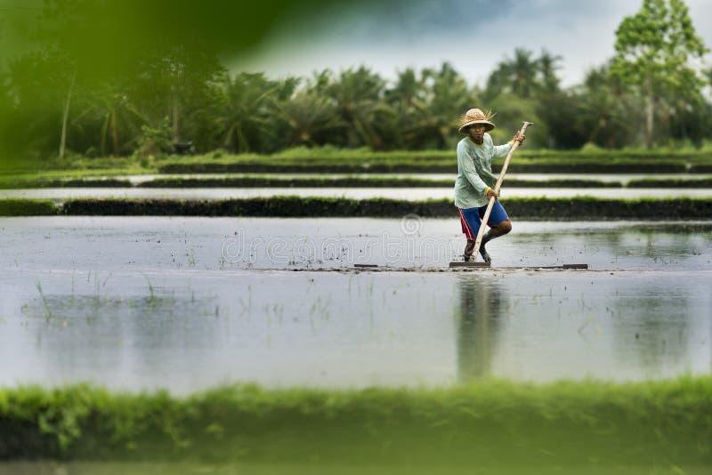 Ινδονησιακός αγρότης που εργάζεται σε ένα πεζούλι ρυζιού στοκ εικόνα