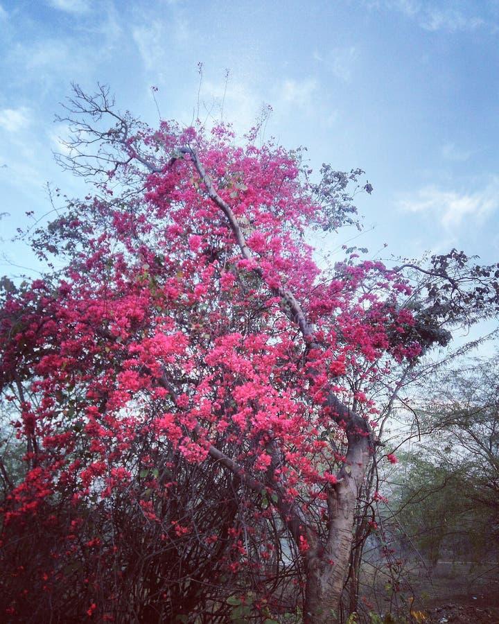Ινδικές όμορφες εγκαταστάσεις με τα μικρά λουλούδια στοκ φωτογραφία με δικαίωμα ελεύθερης χρήσης